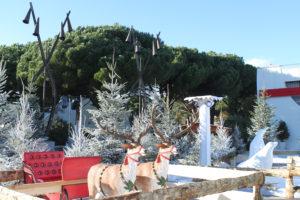 Décor féerique et animaux fantastiques