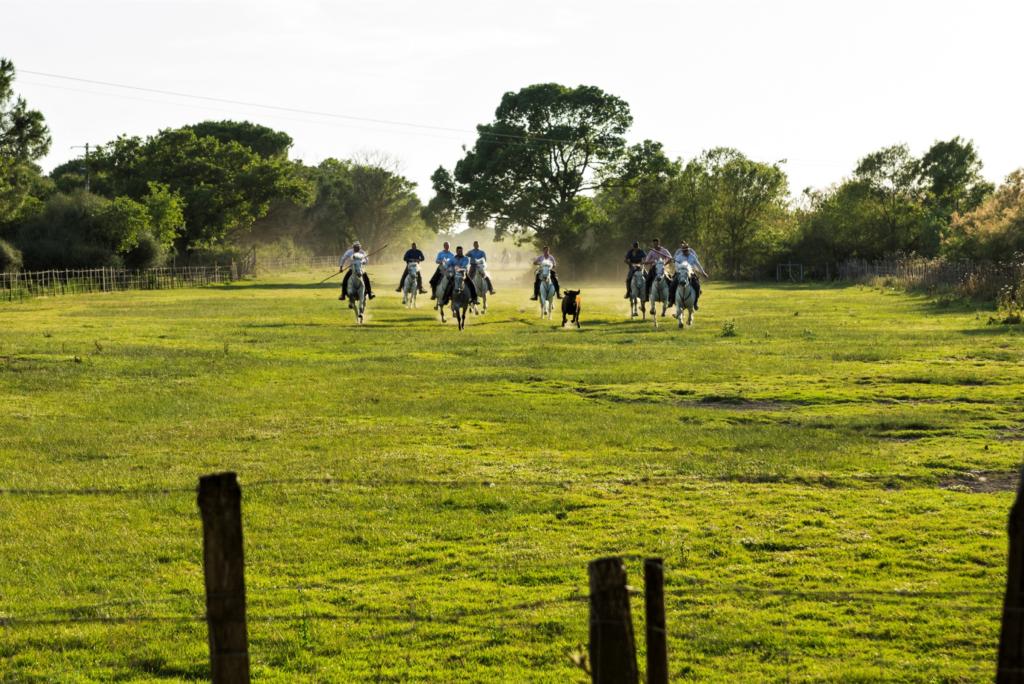 La troupe des gardians poursuivant les taureaux pour les marquer.