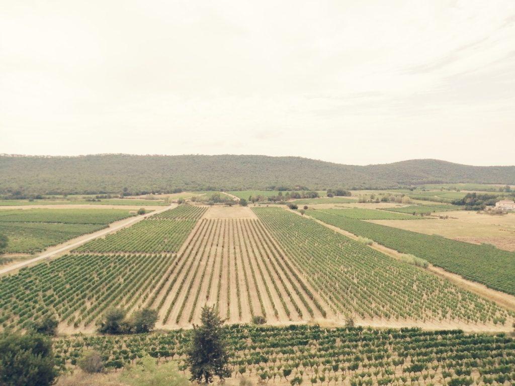 Champs de vignes
