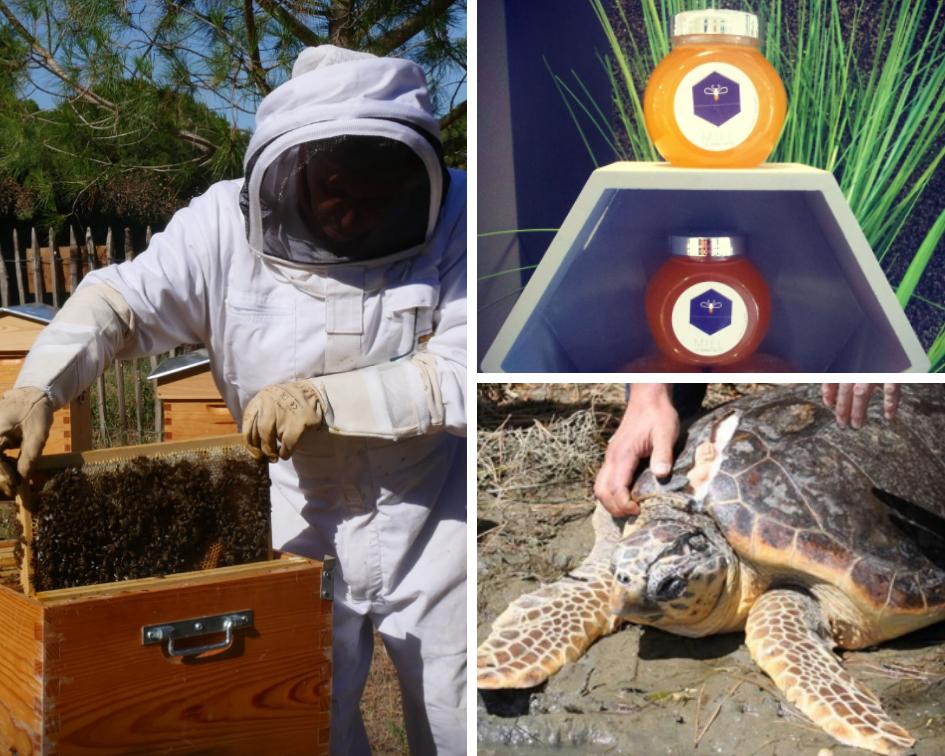 Tortues et abeilles à La Grande Motte